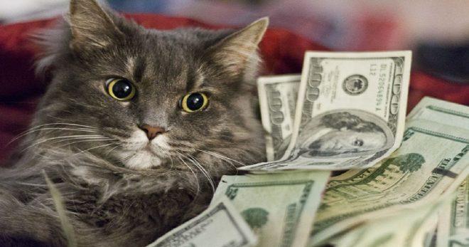 Мурлыка по цене квартиры, или 10 самых дорогих котов!