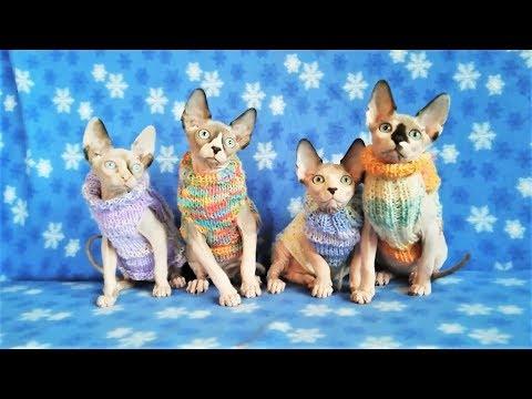 Приколы с животными 2017   2018 Смешные собаки и кошки Прикольные животные Смешные Животные 2017