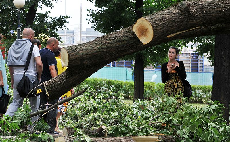 Реновация: В Москве срубят каждое 4-е дерево