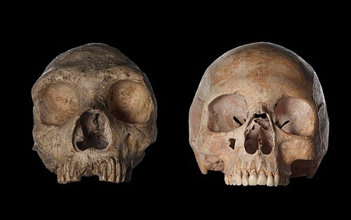 Общий предок людей и неандертальцев куда-то потерялся ...