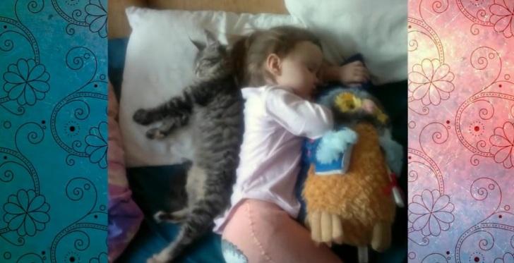 Ах, эти сложные кошачьи будн…