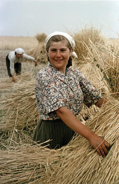 Сбор урожая пшеницы на украинском совхозе. Украина, 1950-е годы. Фото: Semyon Osipovich Friedland.