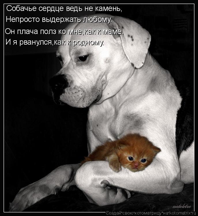 Смешные статусы про собак