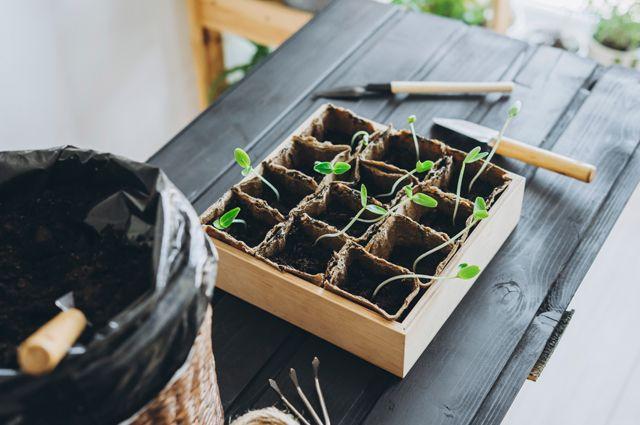 Сезонные работы. Какие приятные хлопоты ожидают садоводов в мае?
