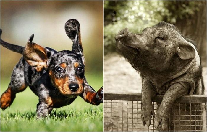 Фото животных, глядя на которые, трудно не улыбнуться