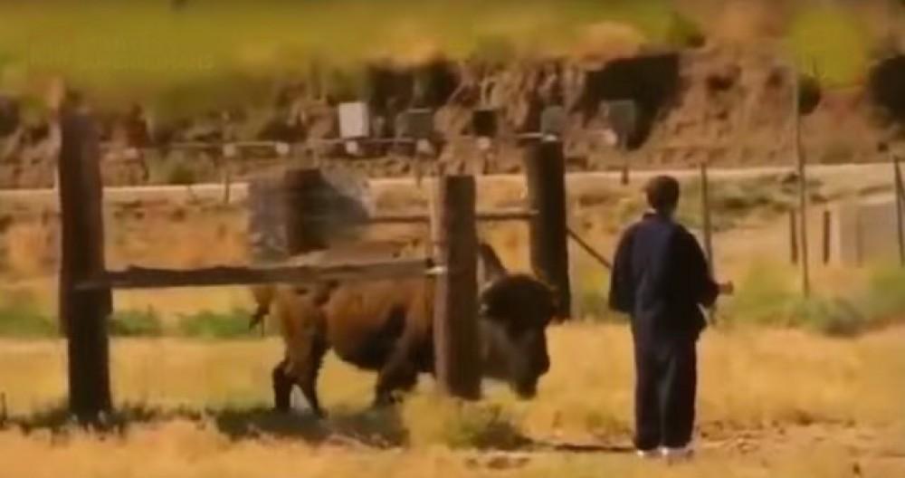 Японский мастер управляет животными при помощи энергии ци (чи)