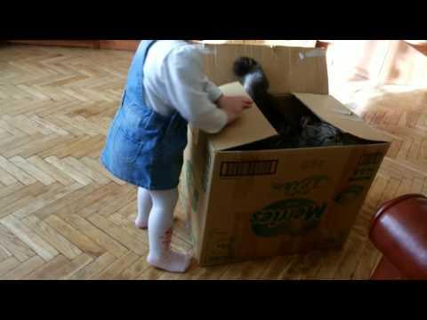 Готовимся к переезду. Дети упаковывают КОШКУ! /Children to pack the cat