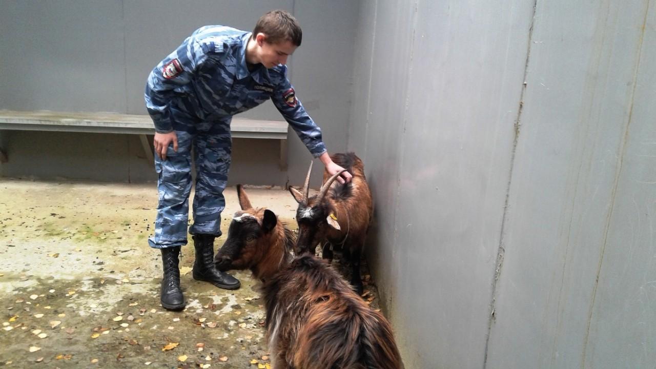 «А у нас на 9-м этаже коза с козлёнком!» Весь подъезд покатывался со смеху, когда обнаружил гуляющую между квартирами парочку