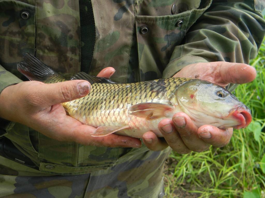зимняя рыбалка арбалет