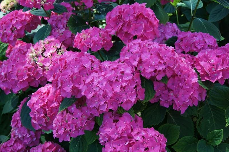 10 самых красивых, но смертельно опасных цветов