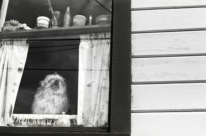 Сейди (22 года) собаки, фото собак, фотографии животных