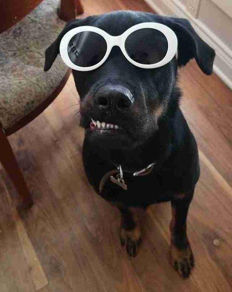 Никто не усыновлял щенка из-за его смешного прикуса, кроме одной семьи