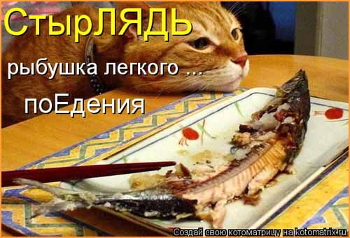 Кулинарные котоматрицы 25