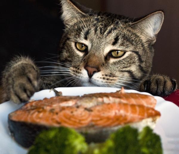 О вреде сухого корма для кошек