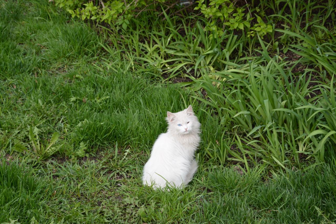 Братья наши меньшие: чем кормить кота?