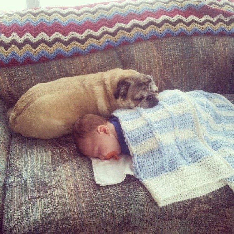 Собаки и младенцы