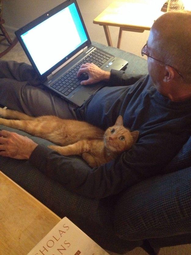 CatsGoldenHearts30 Почему мы любим кошек