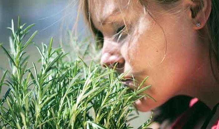 Самая сильная трава для суставов, мозгового кровообращения, сосудов, сердца, надпочечников, кожи, волос и не только!