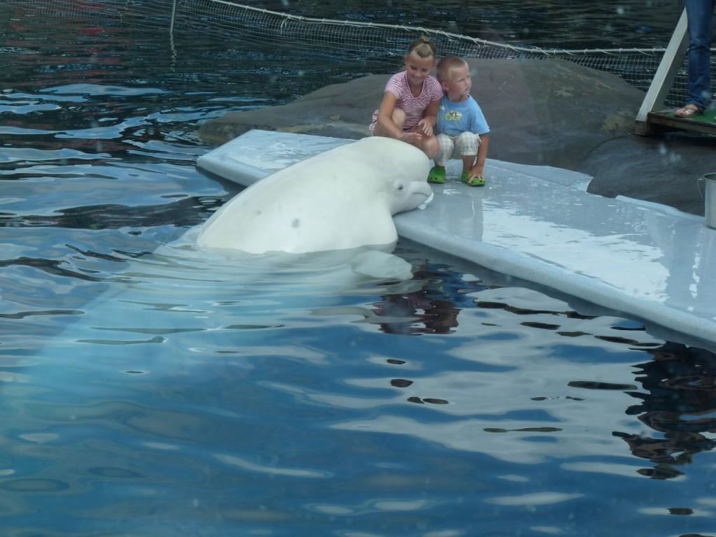 Маленькие ласки большого кита.