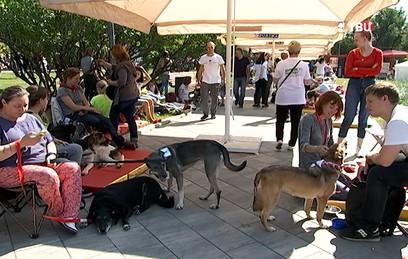 В Москве начался благотворительный фестиваль для бездомных животных