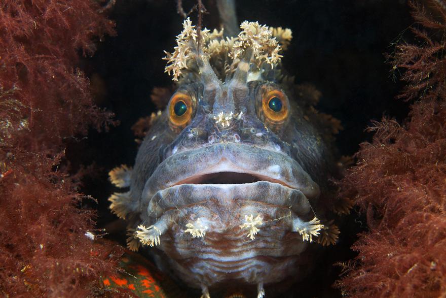 2177 Подводные чудеса Белого моря на фото Александра Семенова