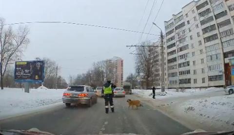 В Челябинске полицейский остановил машины, чтобы хромой пес перешел дорогу