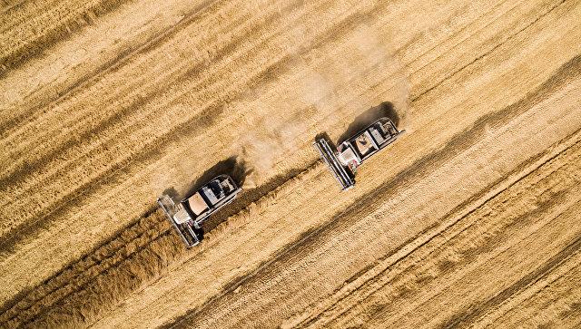 Турция отменила ограничения на поставки российской пшеницы