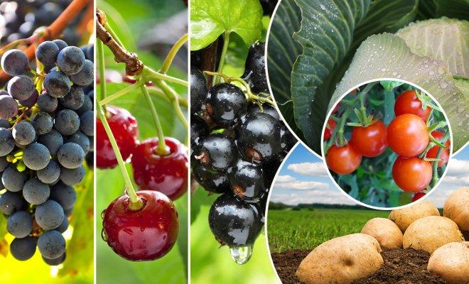 С каждым годом все сложнее собирать богатый урожай? Мы знаем, что делать!