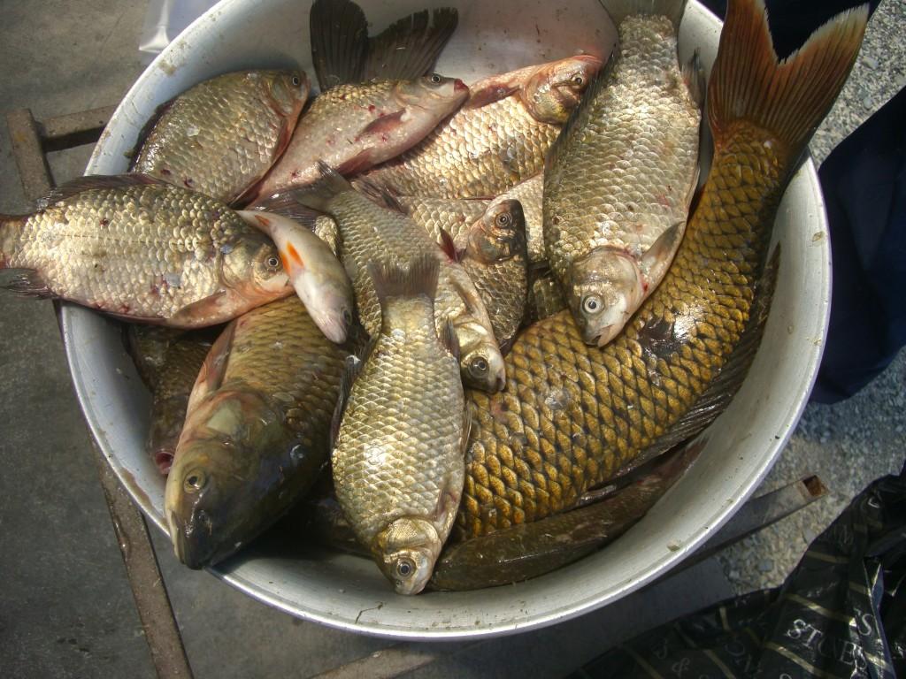 рыбалка в городе саратове