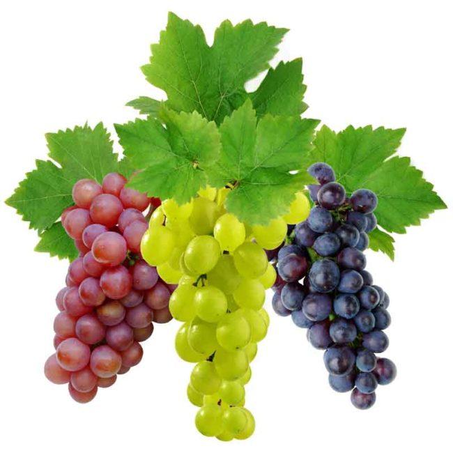 САД, ЦВЕТНИК И ОГОРОД. Выращивание винограда
