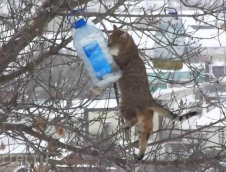 Кот ловко стащил сало из кормушки для синиц)
