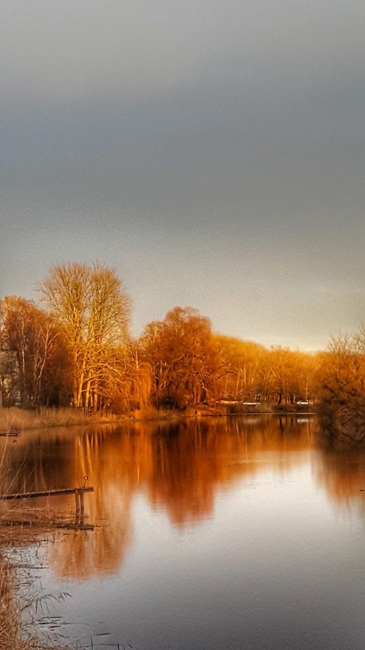 Осенние берёзы времена года, природа, юрмала