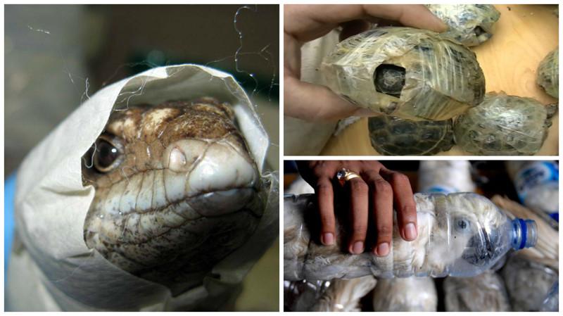 Рынки экзотических животных в России: шокирующие кадры