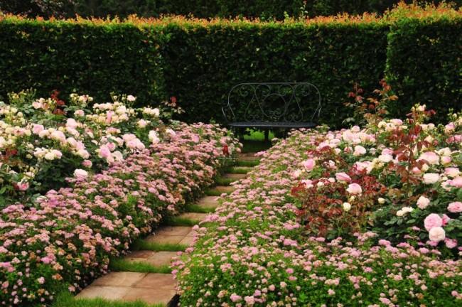 Живая изгородь из миниатюрных цветущих кустов спиреи Литтл Принсесс в романтичном уголке сада