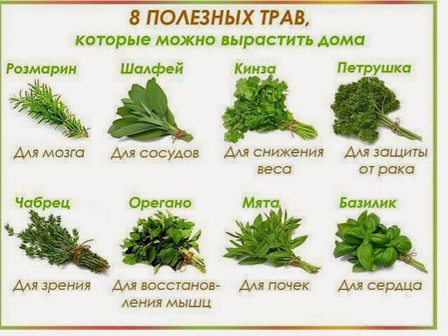 восемь полезных трав