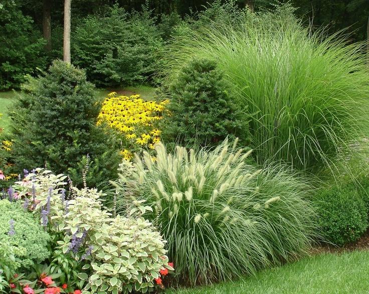 какими травами можно избавиться от паразитов