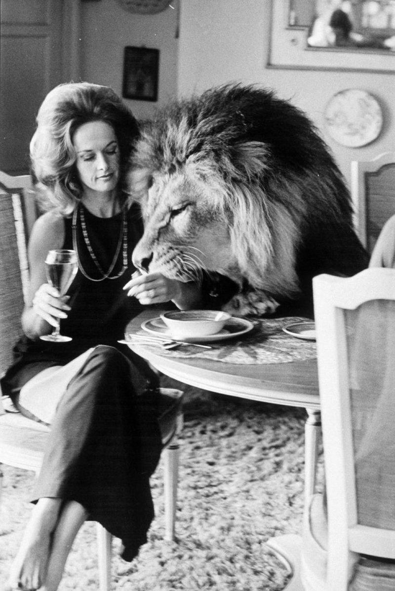2. Актриса Типпи Хедрен во время фотосессии со своим львом в 1970 году век, мир, прошлое, снимок, событие, странность, фотография