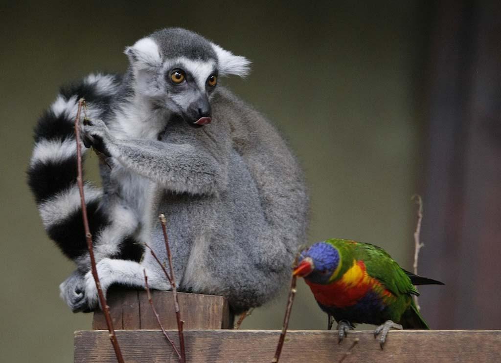 AnimalOddCouples 36 Самые странные парочки животных