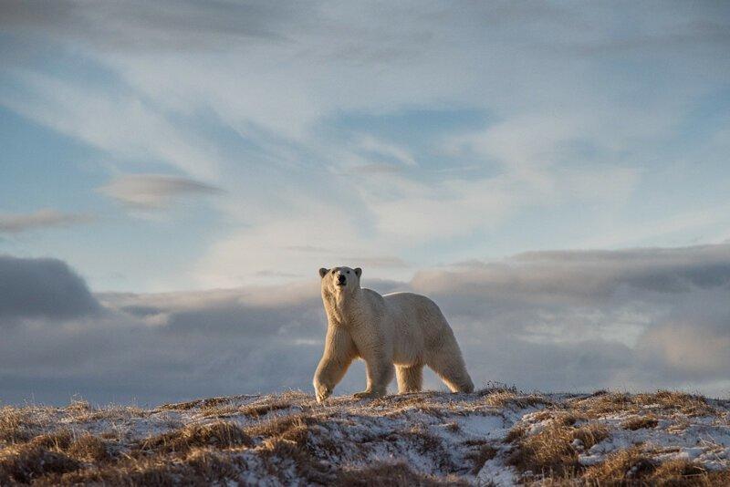 Запредельно красивая «Дикая природа России – 2018» (44 фото) 1 часть