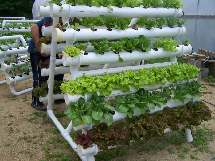Вертикальный сад для зелени из ПВХ-труб.