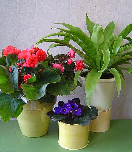 Комнатные цветы и их