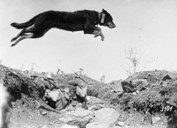 Героический бой пограничников и их собак с фашистской нечистью