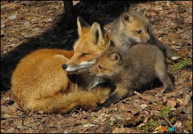 Очаровательные животные