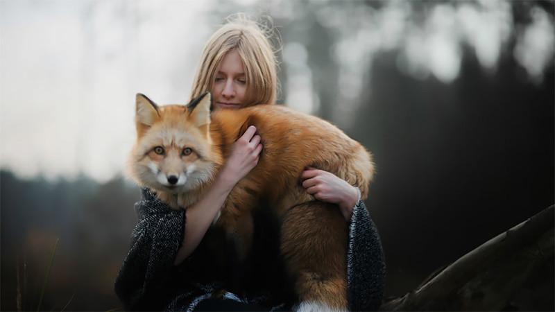Как лисица подружилась с фотографом
