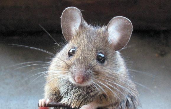 в мире животных- последние новости