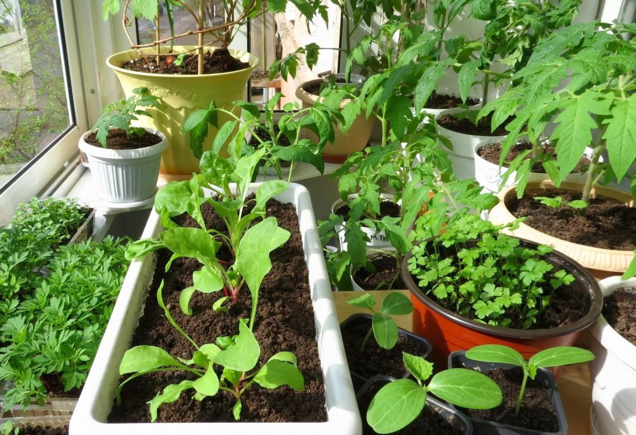 Зимний овощной конвейер