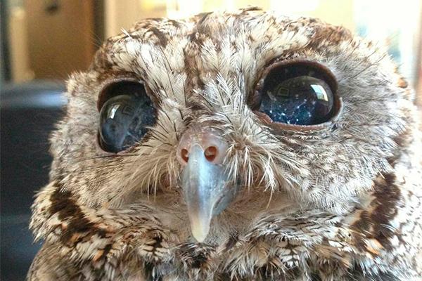 Ученые спасли сову с космическими глазами