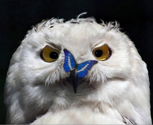 212355-R3L8T8D-650-owls01
