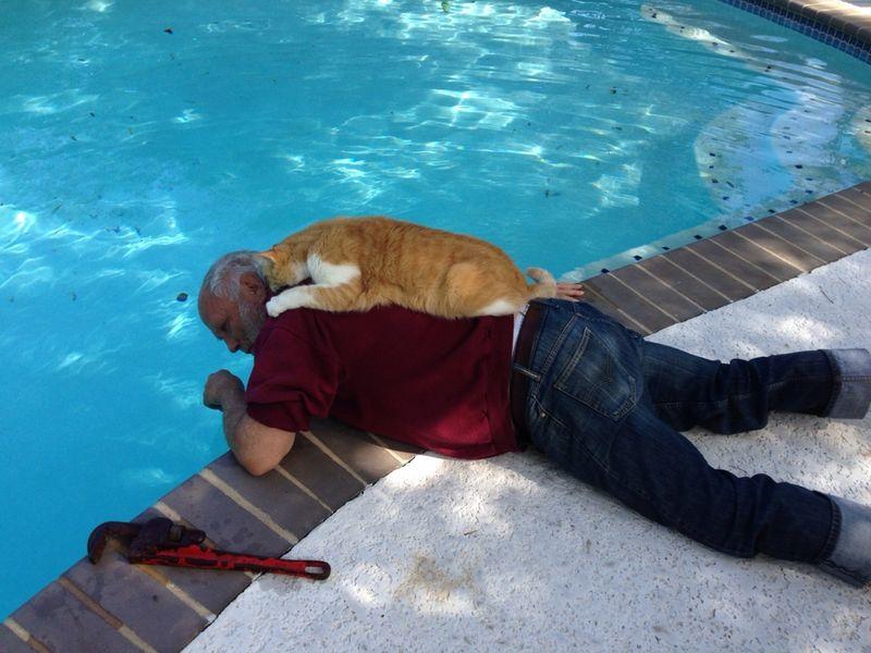 CatsGoldenHearts08 Почему мы любим кошек
