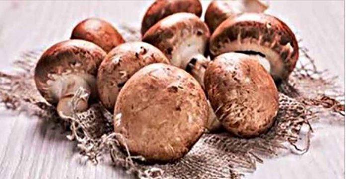 Что происходит с вашим телом, когда вы едите грибы?